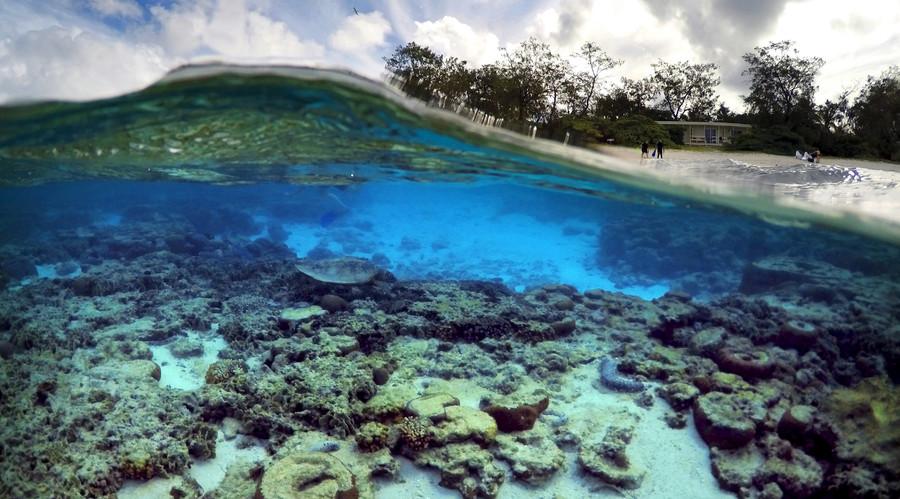 Viral spiral: 'Obituary' for embattled Great Barrier Reef slammed for hyperbole