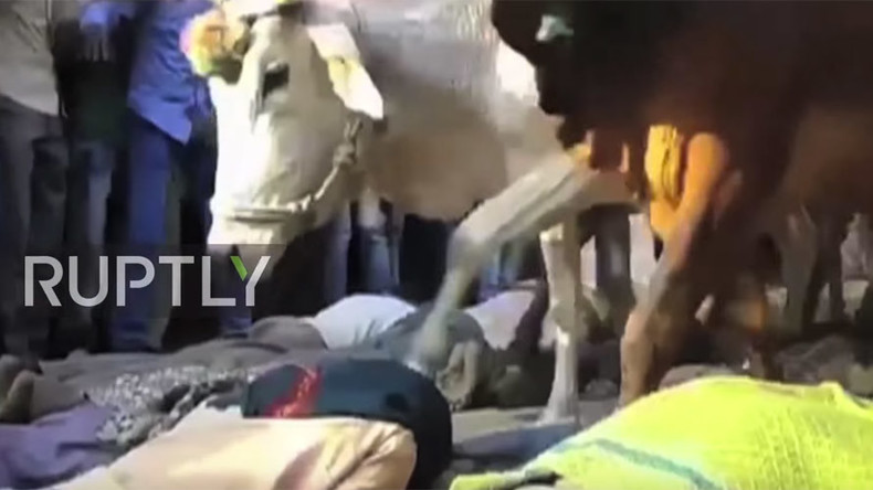 Cattle trample worshipers in India during holy ritual (VIDEO)