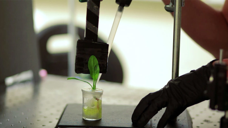 MIT scientists 'train' spinach plants to sniff out bombs (VIDEO)