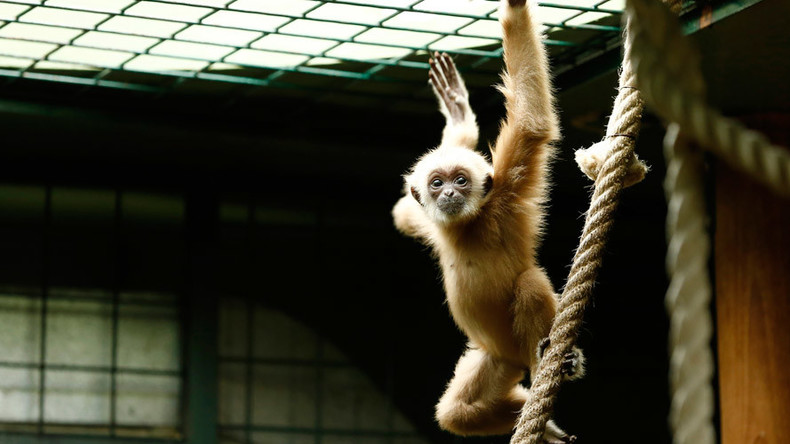 'Promising & exciting': Brain implants with wireless signal let paralyzed monkeys move normally