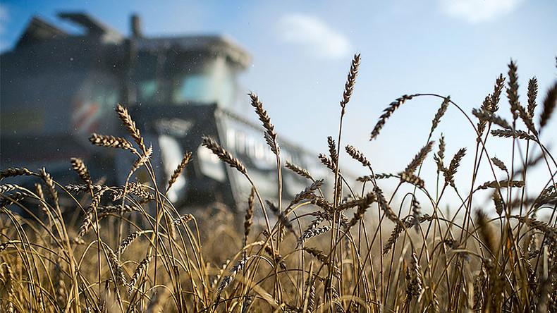 Saudi Arabia wants Russian wheat