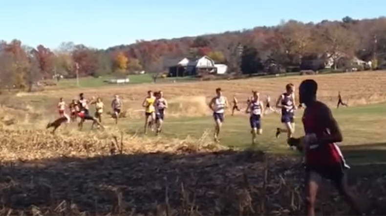 Cross country competitor bodyslammed by oncoming deer (VIDEO)