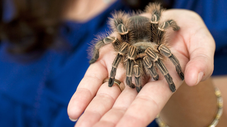 Pet spider banned from Parliament, but Tory whip won't give up leggy assistant