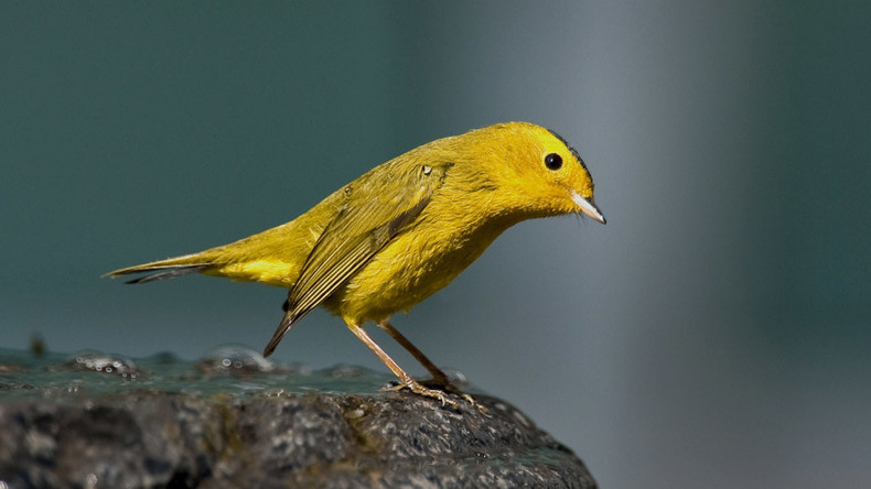 Missing 'canary' mail prompts alarm over security of RiseUp email service