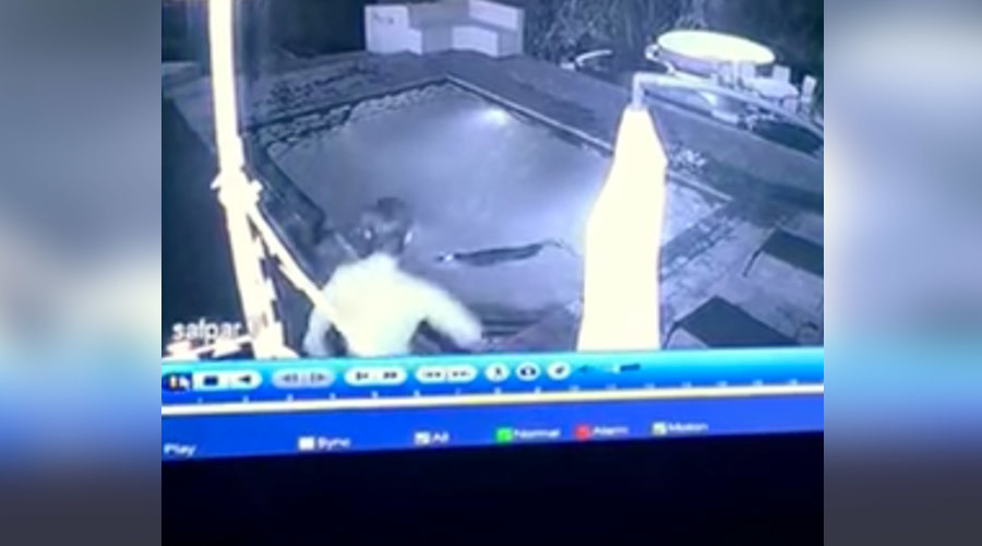 CCTV captures horrifying crocodile attack on couple in pool (VIDEO)