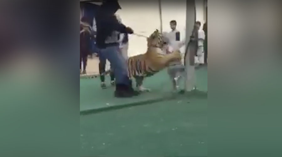 Little girl attacked by tiger in Saudi Arabian market (VIDEO)