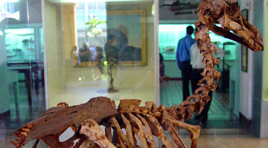 Dodo skeleton sells at British auction for £346k
