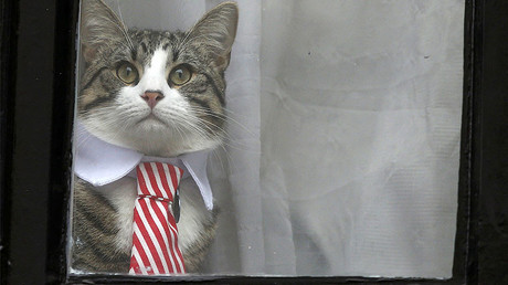 Assange's cat steals spotlight while WikiLeaks boss questioned