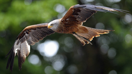 French Air Force to use eagles against rogue drones