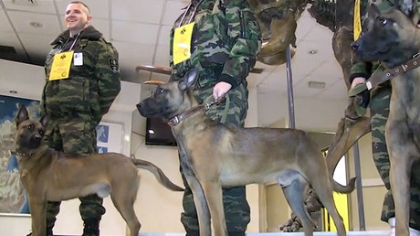 Doggy doubles: Cloned canines to assist Russian police in Siberia (VIDEO)