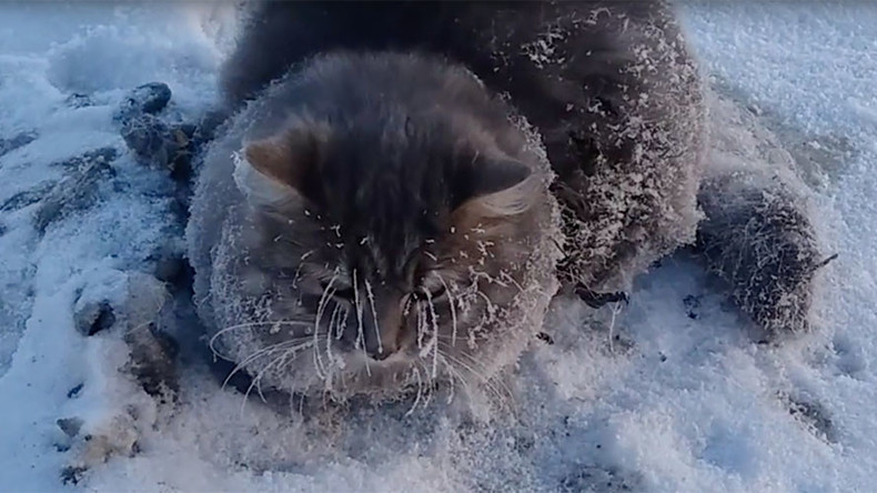 Thawed paws: Cat stuck in ice puddle rescued by Russian couple (VIDEO)