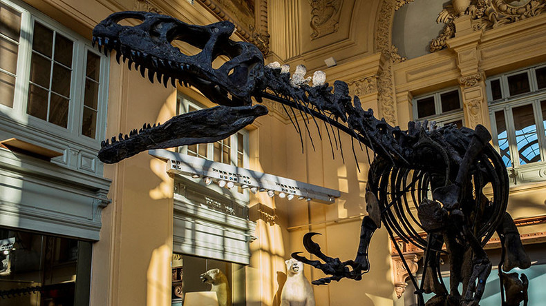 Million dollar dinosaur: Jurassic giant goes under the hammer