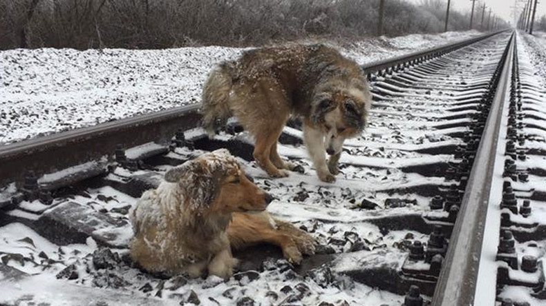 Dog spends 2 days on frozen rail-tracks trying to save injured pal (PHOTOS, VIDEO)