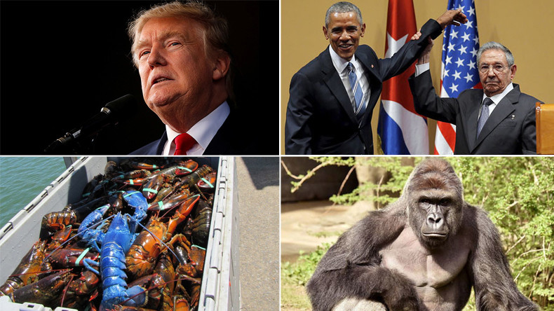 'UFOs,' Harambe & Obama left hanging: RT's biggest viral stories of 2016