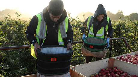 Migrant workers pick apples at Stocks Farm in Suckley, Britain October 10, 2016. © Eddie Keogh