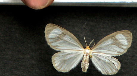 Cocaine-eating moths? British govt mooted unusual plan to fight Latin American drug barons