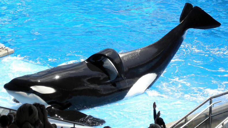 Tilikum, the orca who killed a SeaWorld trainer & inspired 'Blackfish', dies