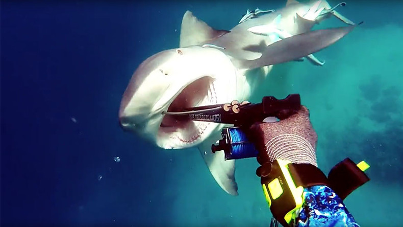 Spear me the details: Terrifying shark impaled by fisherman in vicious attack (VIDEO)