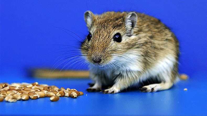 Mind control lasers turn mice into killer rodents with the flip of a switch