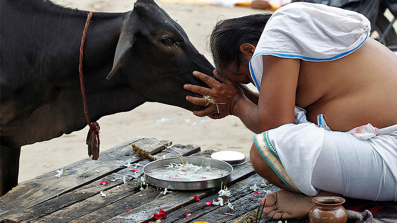 Indian minister slammed for taboo comments on cows