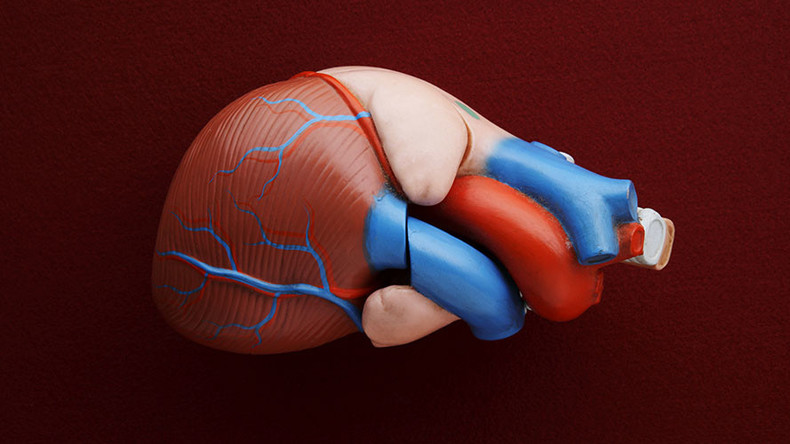 Heart-hugging device pumps blood, scientists successfully test