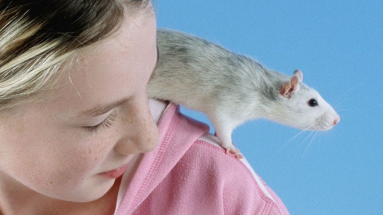 Rare rat virus sickens 8 people in Illinois & Wisconsin
