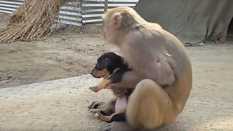 Monkey goes bananas for stray puppy (VIDEO)