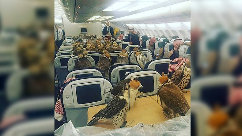 Astonishing pets on planes: Saudi royalty buys airfare for 80 falcons (PHOTOS)