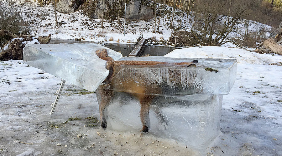 Fox frozen in block of ice bids for #BestCarcass title (PHOTOS)
