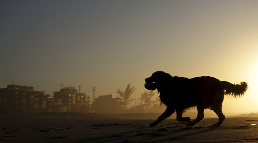 5 dog deaths linked to skin cancer cream – FDA