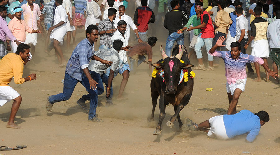 Indian state backs traditional bullfighting despite recent deaths