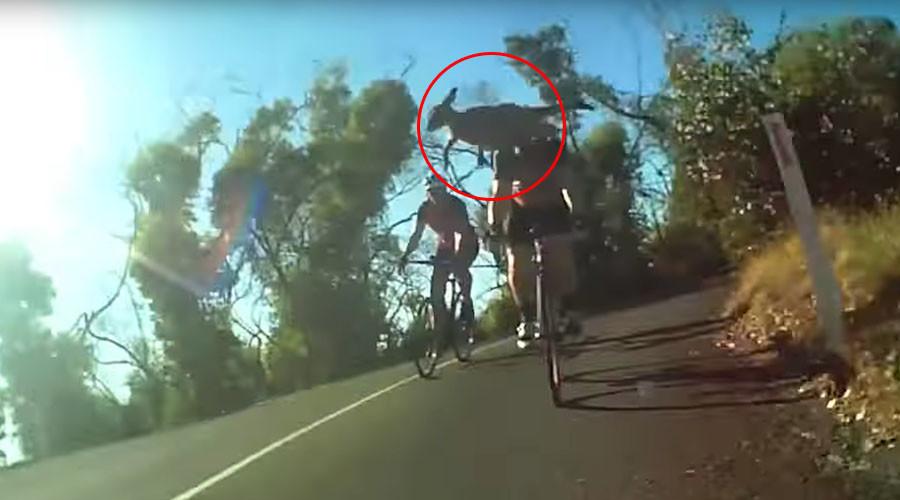 Vicious cycle: Hopping-mad kangaroo kicks cyclist in head (VIDEO)