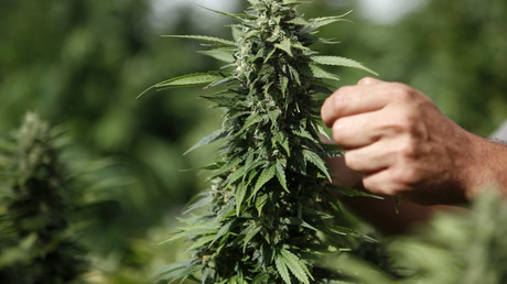 Israel may end policy of weeding out marijuana users for initial offenses