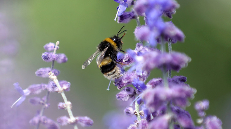 Bee-pocalyse Now: Study details catastrophic human impact on bees