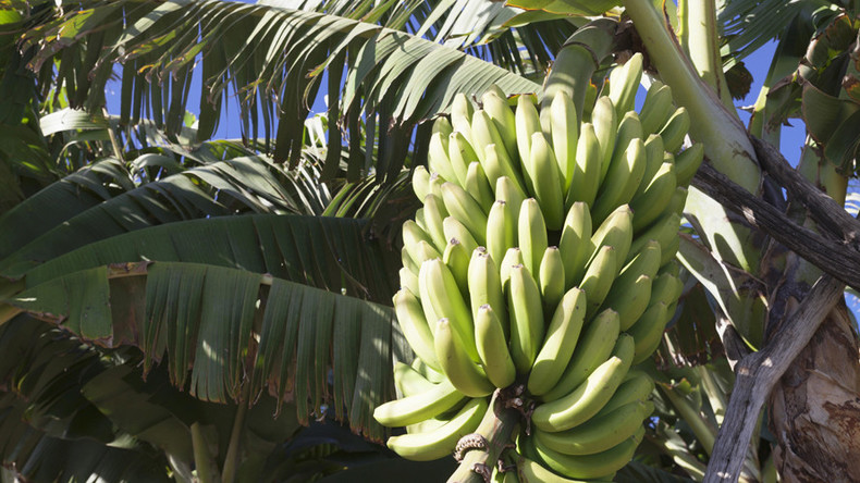 'Go hang on a banana tree': Zimbabwe tells US embassy to buzz off over human rights concerns