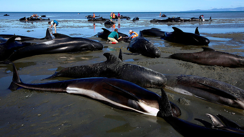 80 pilot whales rescued in epic NZ stranding, but 200 more wash up on shore (PHOTOS)