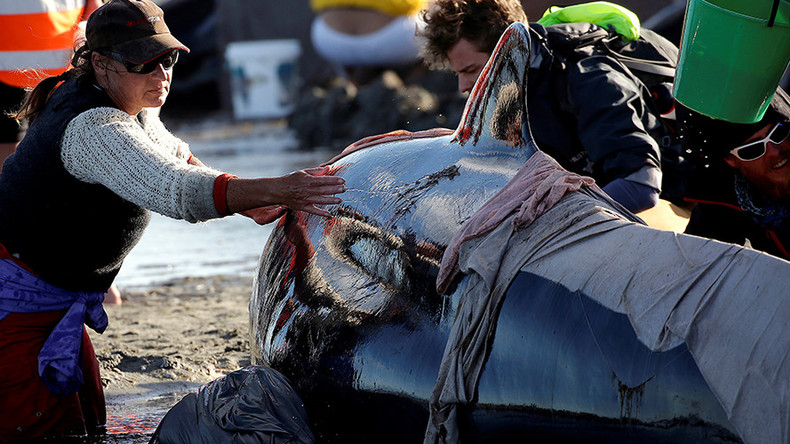 Warning issued over 100s of 'exploding whales' on NZ beach