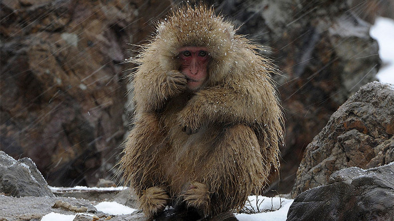 Japanese zoo kills 57 monkeys for having 'invasive alien genes'