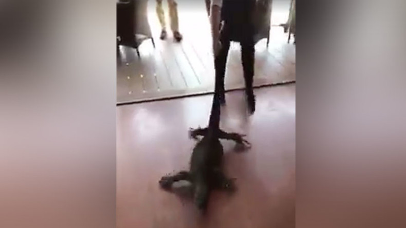 French waitress drags giant goanna lizard out of Australian restaurant  (VIDEO)