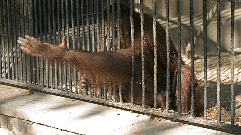 500 animals die at British zoo that left a monkey to rot behind a radiator