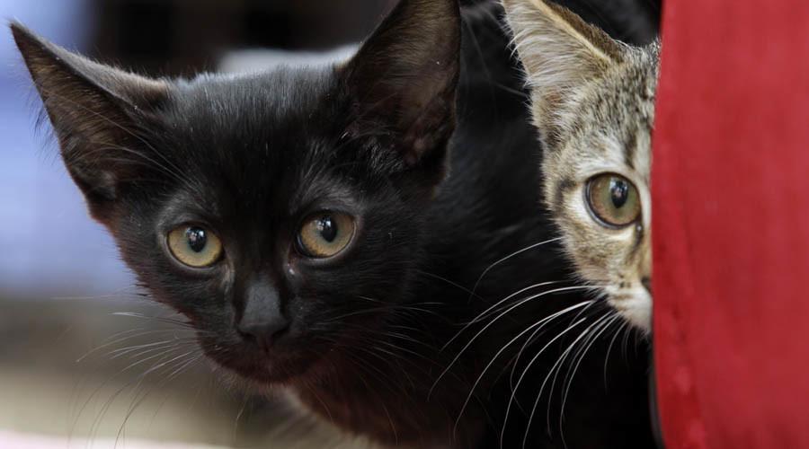 Indian school book's shocking kitten experiment horrifies internet