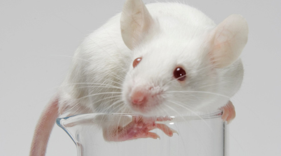 Combination immunotherapies kill brain cancer in mice – study