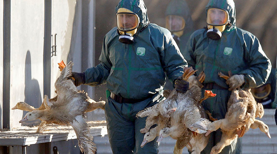 Au revoir foie gras? 600k ducks to be slaughtered in France due to bird flu