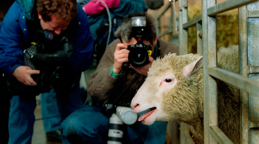 Dolly the sheep: 20yrs on, what's the state of play in cloning?