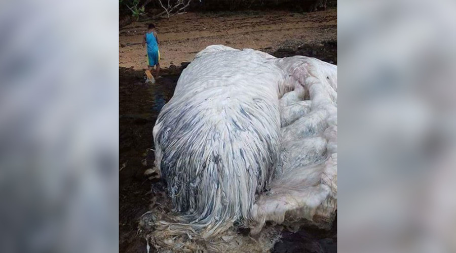 Horrifying 'sea monster' carcasses found washed up on Philippines beaches (PHOTOS)