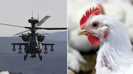 Cock up: Low-flying military aircraft scare chickens to death, MoD forced to pay out