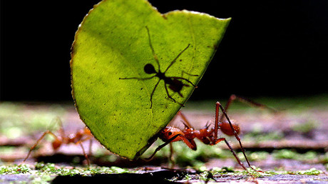 Beijing cracks down on 'ant moving' underground banks
