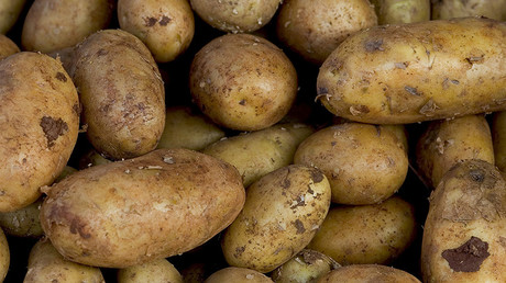 EPA joins FDA to approve 3 types of genetically modified potatoes