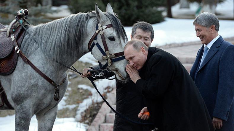 President's pet: Putin's new Kyrgyz race horse & his other fauna interactions (PHOTOS, VIDEOS)