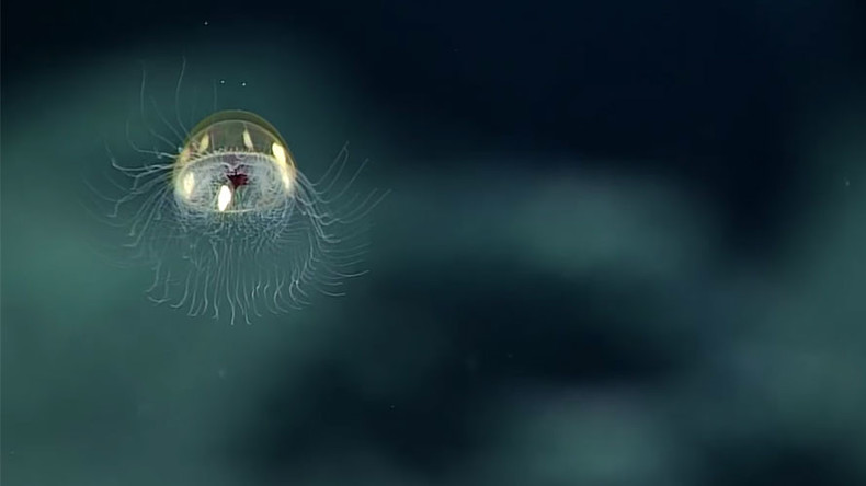 Stunning footage of 'cosmic jellyfish' captured in NOAA's expedition (VIDEO)